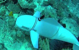 Un pez robótico estudiará la fauna marina