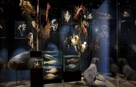 Museos Chilenos: Imperdibles recorridos virtuales